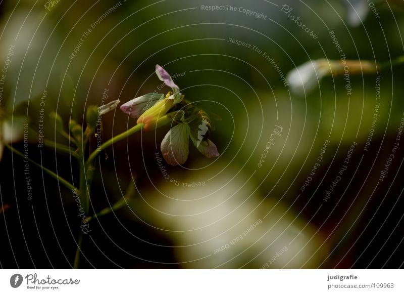 Wiese Fluginsekt Insekt Heide Blüte Blume Pflanze Stengel grün braun schwarz Sommer Umwelt Wachstum gedeihen schön Märchen fantastisch träumen Tier Farbe
