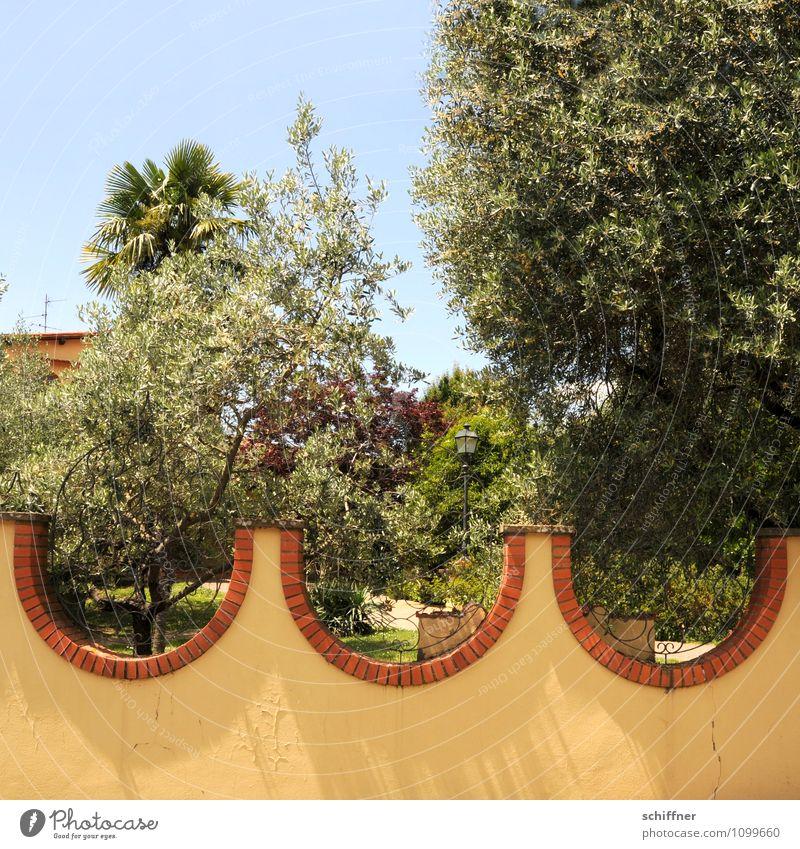 Wellengang Sommer Schönes Wetter Pflanze Baum exotisch Garten Park gelb Olivenbaum Palme Anwesen Mauer Wellenform Gartenzaun mediterran Toskana Italien