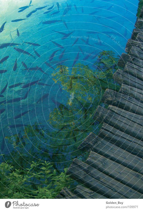 Frische Fische für Fischer Fritz Natur grün blau Pflanze Holz See Steg