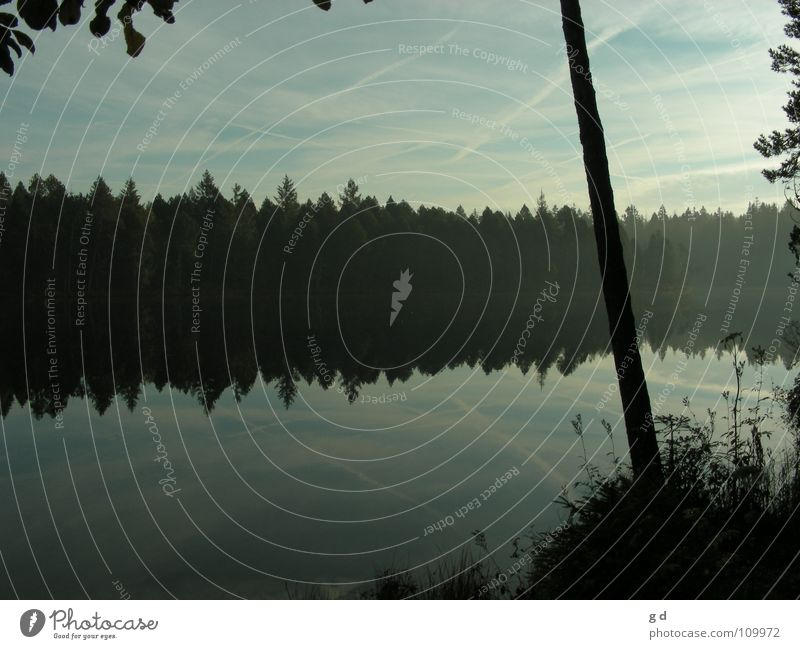 Étang de Gruère - Water Reflections II Wald Baum Reflexion & Spiegelung Wasserspiegelung Gras Wolken Blatt blau blue ruhig