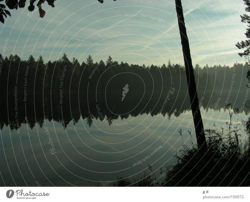 Étang de Gruère - Water Reflections II Wasser Baum blau ruhig Blatt Wolken Wald Gras Wasserspiegelung