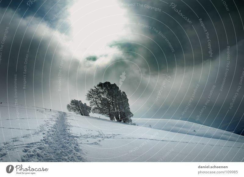 Weihnachtskarte (dramatisch) Sonnenstrahlen Wolken kalt Licht weiß Baum Ferien & Urlaub & Reisen Wintersport Winterurlaub Schwarzwald Tiefschnee Pulverschnee