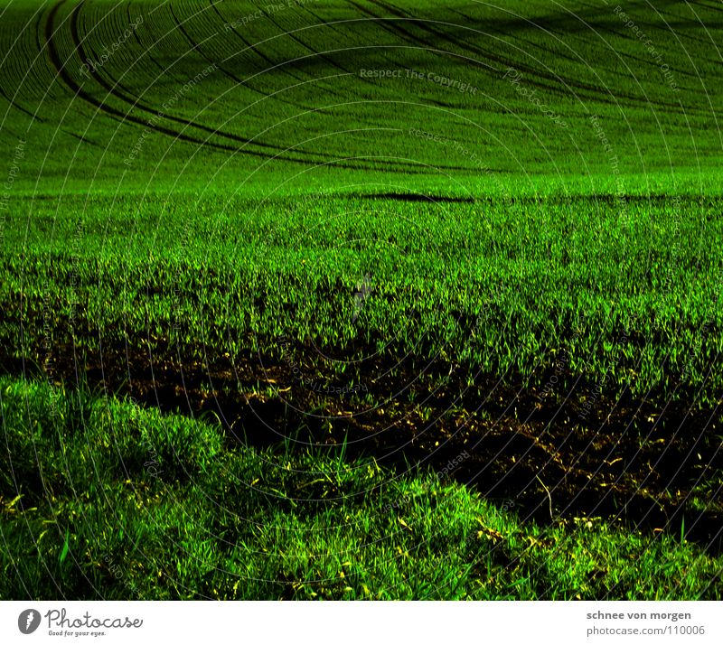 WEITE Gras Feld dunkel Wachstum Dämmerung ruhig Herbst Erde Sand anbei Schatten Spuren Ferne Perspektive
