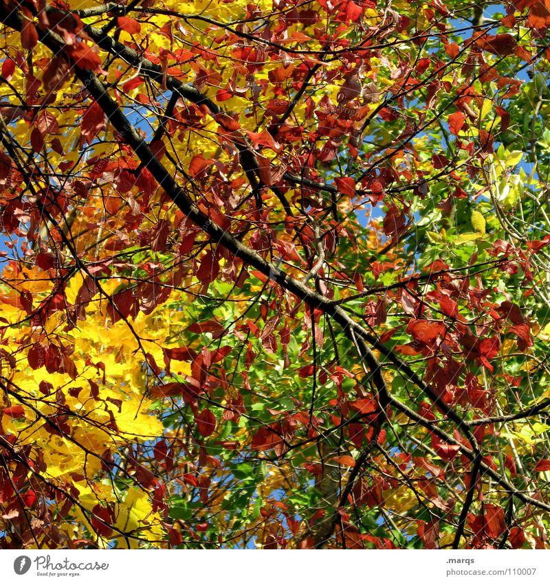 Colorful Durcheinander Baum Geäst mehrfarbig Herbst Blatt Wald Wachstum saftig Kraft Photosynthese Pflanze Botanik Unterholz gelb rot grün Holz Holzmehl Natur