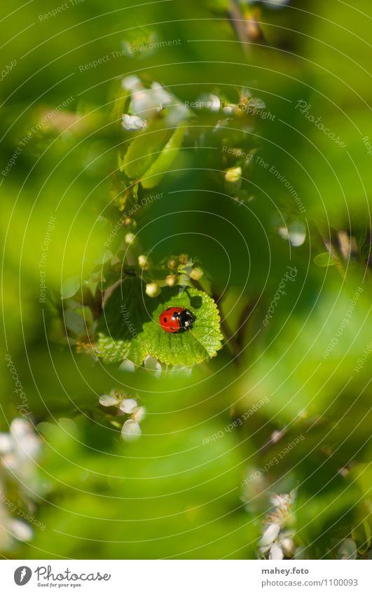 Sonnenplätzchen Wohlgefühl Erholung ruhig Duft Sonnenbad Natur Sommer Schönes Wetter Sträucher Garten Käfer Glücksbringer Marienkäfer genießen klein niedlich