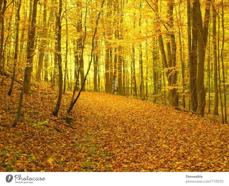 Herbstwald Wald Blatt Stimmung Jahreszeiten ruhig Natur Landschaft Spaziergang Erholung
