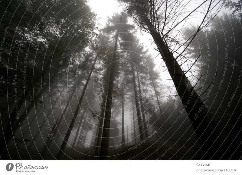 Geisterwald Natur Himmel Baum Wald dunkel Herbst oben Nebel leer Trauer Verzweiflung Baumkrone spukhaft desolat
