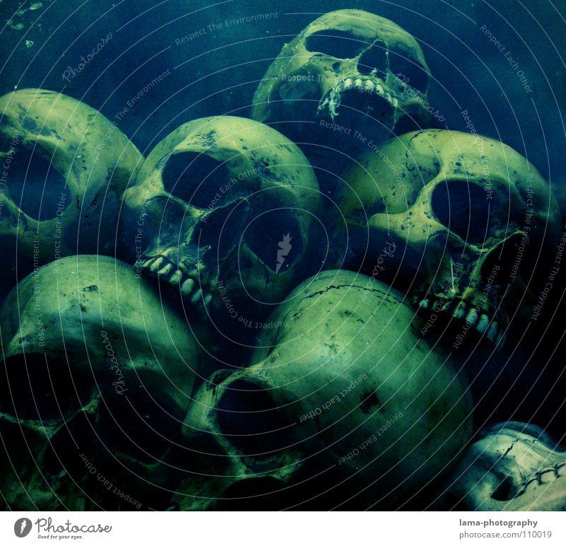 Totenköpfe (in der Tiefe) totenkopf Skelett Schädel Gehirn u. Nerven fatal vergiftet ertrinken Meer Meeresboden Algen gruselig Horrorfilm Angst Alptraum Grab