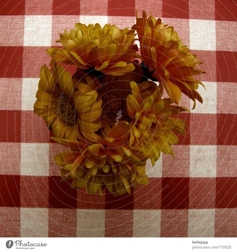 schiffe versenken weiß rot Blume Herbst orange Tisch Dekoration & Verzierung Café Restaurant Decke kariert Verabredung verschönern Jubiläum Gastronomie