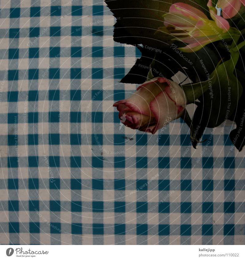 schiffe versenken II (blumen für bit.it) blau weiß Blume Herbst orange rosa Tisch Dekoration & Verzierung Rose Café Restaurant Decke kariert Verabredung