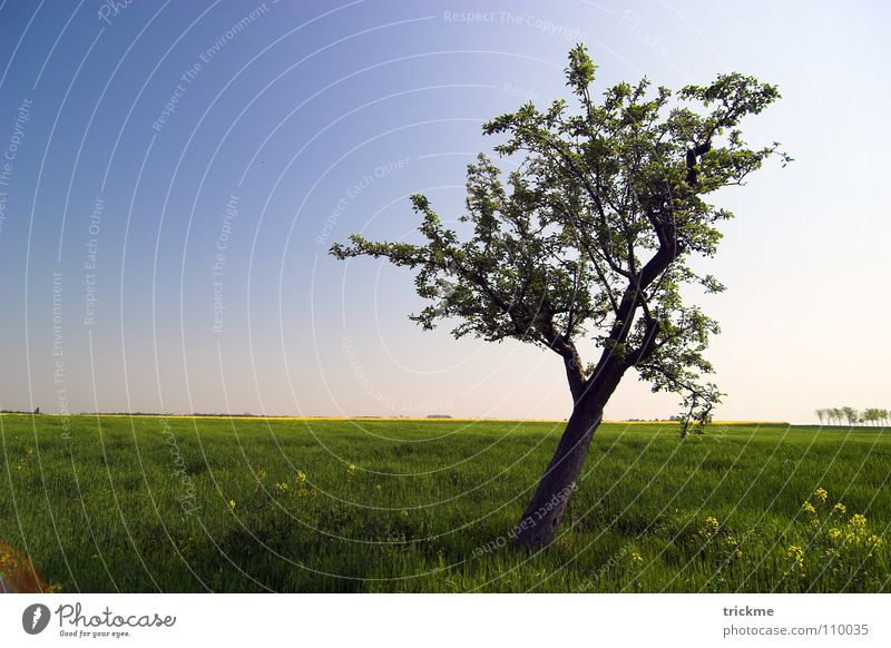 Einsamkeit Baum grün Gras Holz ruhig leer Blatt dunkel harmonisch Unendlichkeit Horizont Sommer blau Freiheit blat Natur Himmel Schatten