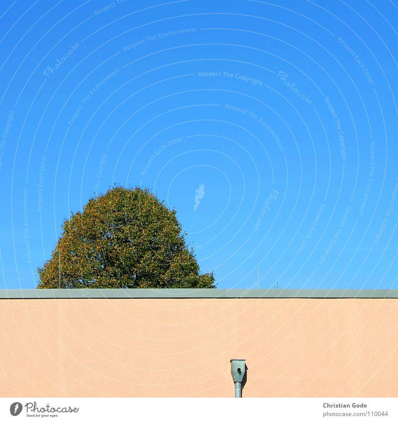 Das erst die Spitze vom Baum Supermarkt Mauer Ecke Lüftung rosa grün Parkplatz Architektur Herbst Baumkrone Himmel blau