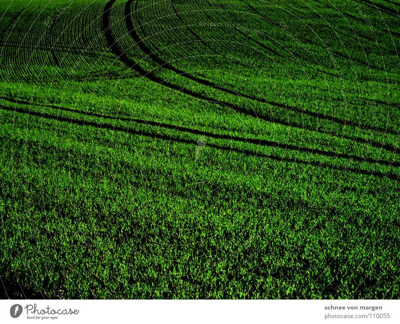 FERNE grün schwarz Herbst Gras Feld Kreis Gastronomie Ackerbau Furche