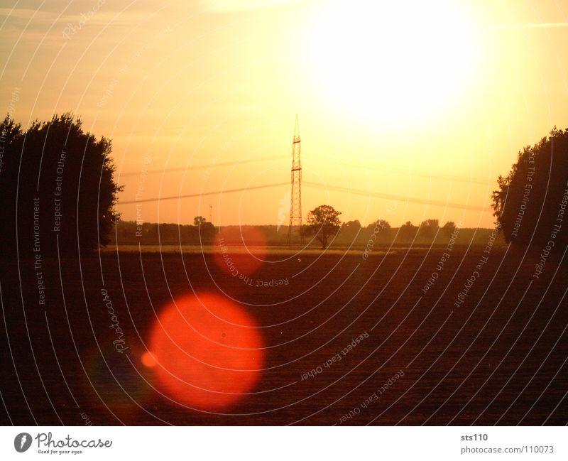 Spätsommer Sonnenuntergang Licht Sommer blenden Sonnenstrahlen Baum ruhig Sicherheit Himmelskörper & Weltall schön Wärme Freiheit Freude Kraft Natur