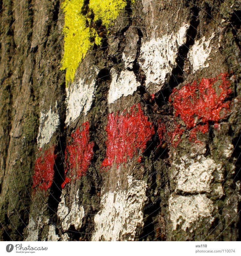 Zeichen weiß Baum rot gelb Farbe Kommunizieren Ziel Zeichen Richtung Symbole & Metaphern Baumstamm Wegweiser Baumrinde