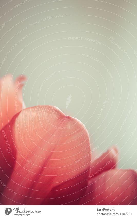 ein Blümchen dazu Pflanze Frühling Blume Tulpe Blüte ästhetisch schön rot Farbfoto Innenaufnahme Makroaufnahme Menschenleer Textfreiraum links
