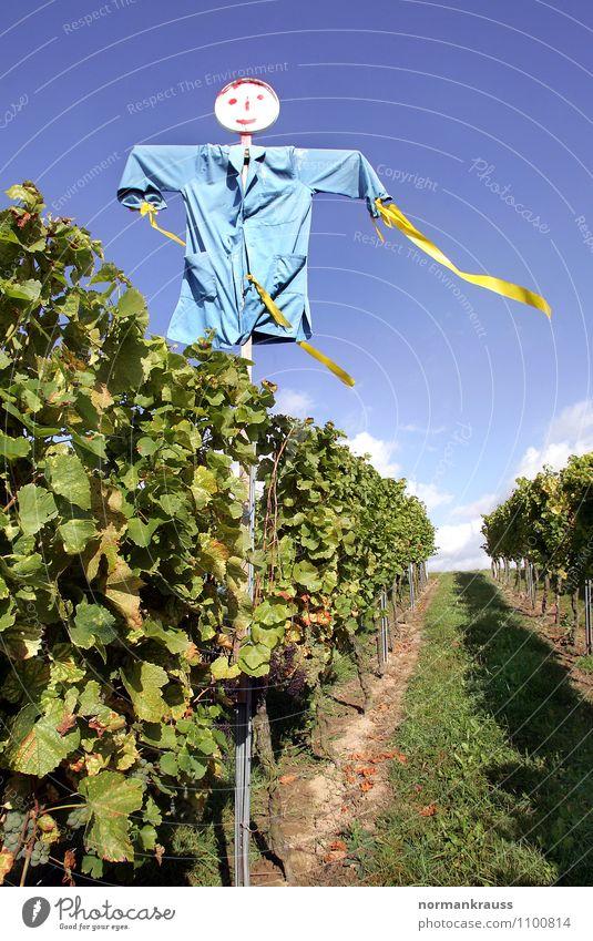 Vogelscheuche Pflanze Feld gruselig hässlich blau grün Weinberg verscheuchen Vogelabwehr herbstlich Rebstock Farbfoto Außenaufnahme Menschenleer Tag