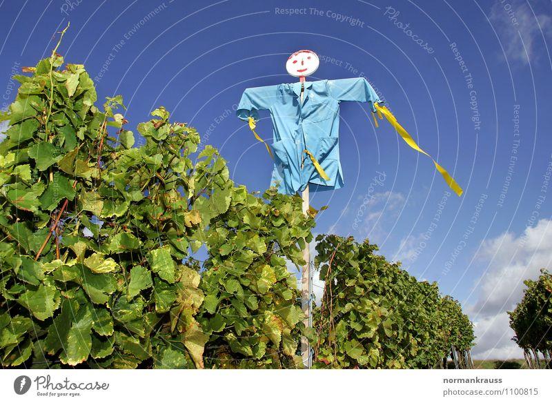 Vogelscheuche Himmel Natur blau Pflanze Umwelt Herbst Angst Wein violett gruselig skurril Puppe hässlich Weinberg