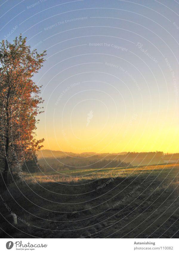 Sommerlandschaft im Herbst Landschaft Erde Himmel Horizont Wetter Nebel Hügel Farbe Aussicht Mühlviertel Abend Licht Schatten Panorama (Aussicht) Baum Wiese