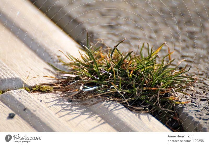 Durchwachsen Umwelt Natur Pflanze Sonne Sonnenlicht Gras Grünpflanze Wiese Stein Beton Wachstum stark braun grau grün Lebensfreude selbstbewußt Kraft