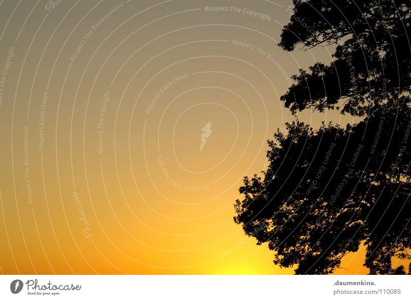 jack johnson Baum Sonnenuntergang Blatt ruhig Physik Luft lau Sommer modern Himmel Ast Baumstamm Abend Wärme Schatten Silhouette