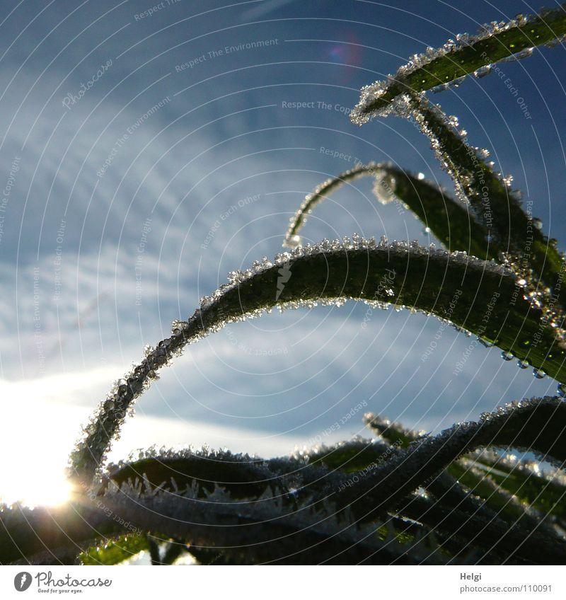 eiskalter Morgen II... frieren Raureif gefroren Eiskristall glänzend Gras Halm Am Rand Ecke lang dünn gekrümmt quer Wegrand Wolken Licht grün weiß erleuchten