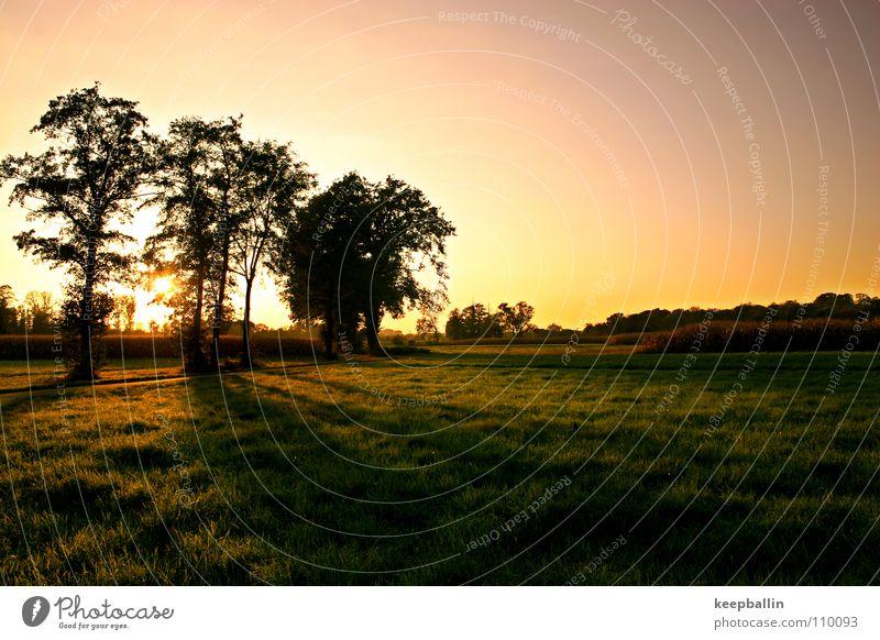 Herbsttag Farbfoto Außenaufnahme Dämmerung Schatten Silhouette Sonnenaufgang Sonnenuntergang Panorama (Aussicht) harmonisch Erholung ruhig Landschaft