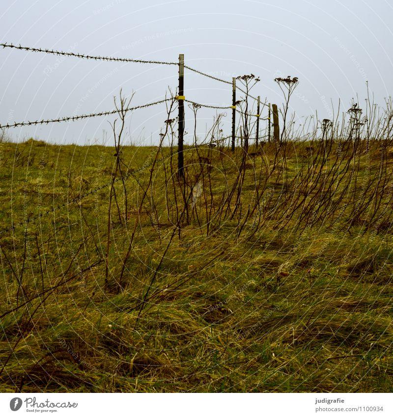 Weide Natur Pflanze Landschaft Umwelt Wiese Gras natürlich Landwirtschaft Zaun Barriere Grenze Forstwirtschaft Wildpflanze Stacheldraht Stacheldrahtzaun