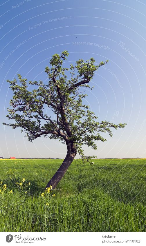 Grüne Idylle Baum grün Gras Holz ruhig Einsamkeit leer Blatt dunkel harmonisch Unendlichkeit Verlauf Blume blau Freiheit Natur Himmel Schatten Ast hot