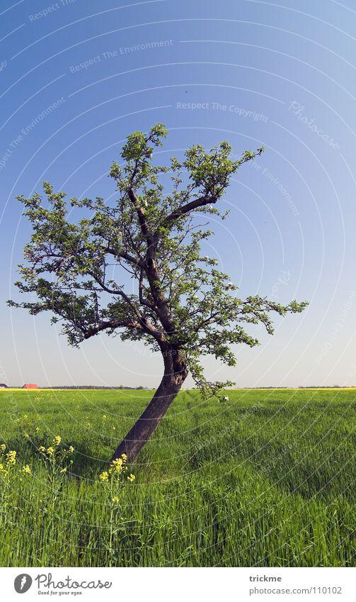 Grüne Idylle Natur Himmel Baum Blume grün blau ruhig Blatt Einsamkeit dunkel Gras Freiheit Holz leer Ast Unendlichkeit