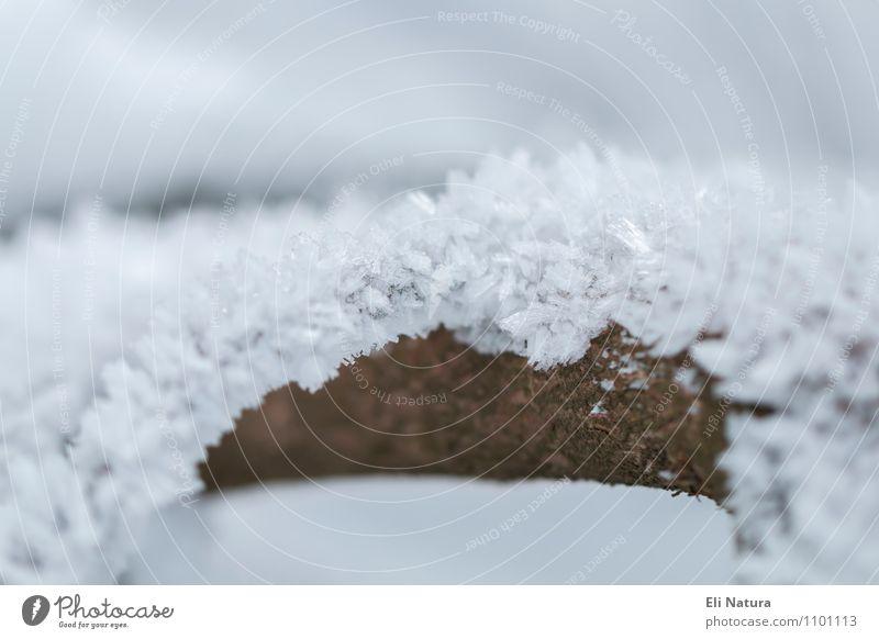 Eiskristalle Umwelt Natur Pflanze Tier Urelemente Winter Frost Schnee Baum Ast Zweig Schneeflocke Garten Park Wiese Wald Kristalle kalt Sauberkeit blau braun