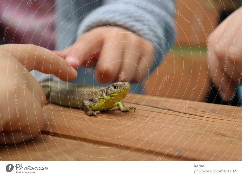 Stillhalten Tier Leben Kindheit berühren entdecken Sinnesorgane Schuppen Echte Eidechsen