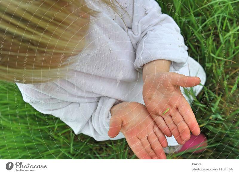 Raupe Kind Natur Sommer Hand Tier Wiese Kindheit berühren Neugier entdecken Kleinkind krabbeln Interesse achtsam 1-3 Jahre