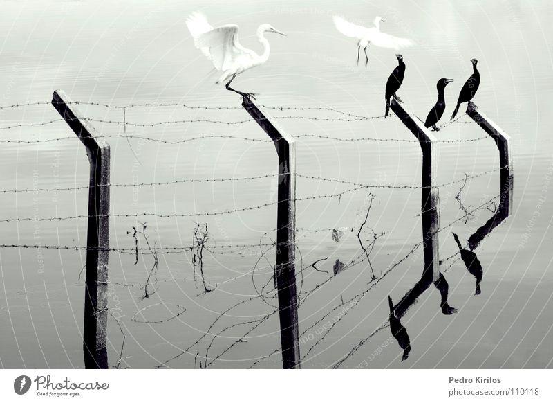 life is Natur Leben Vogel Brasilien Belo Horizonte