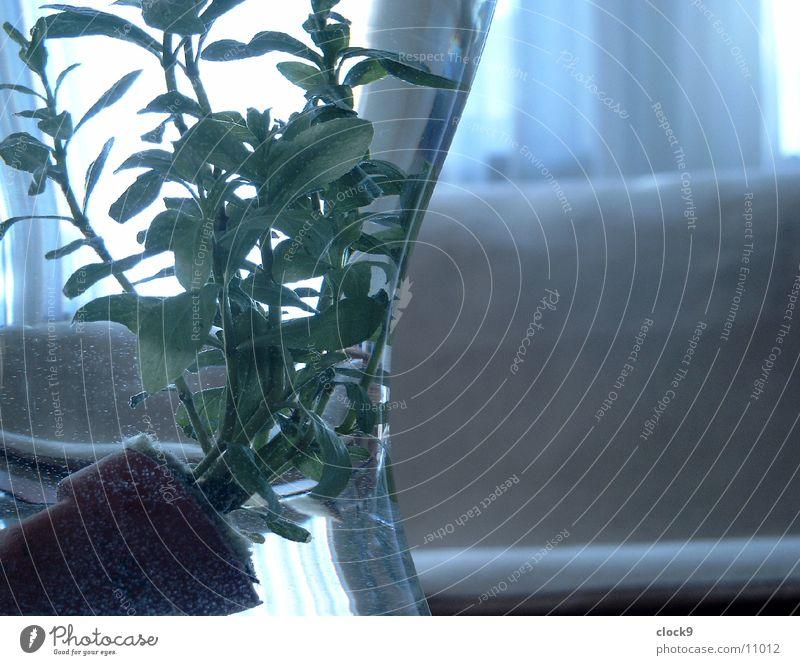 Wasserpflanze Wasser Pflanze Glas Tisch Häusliches Leben