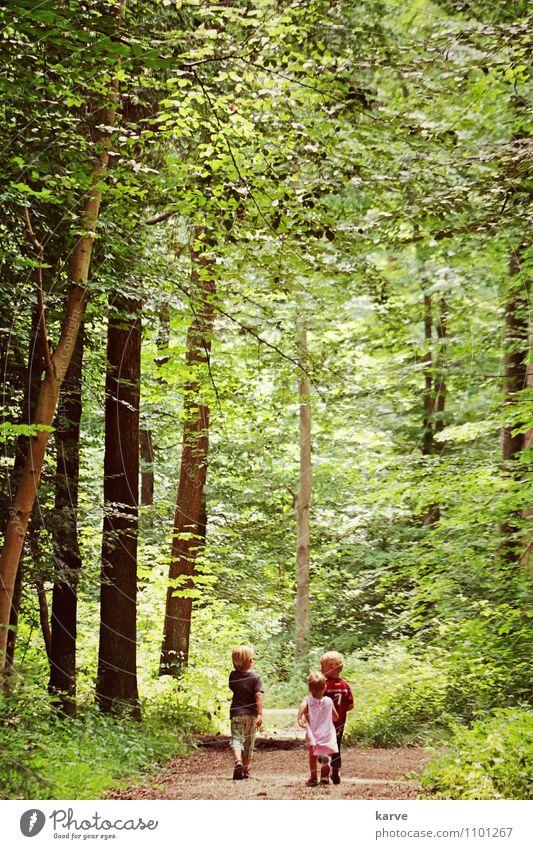 Sonntagsmarsch Mensch Kind Sommer Baum Blatt Freude Mädchen Wald Junge Glück Freiheit Freundschaft Freizeit & Hobby Kindheit frei wandern