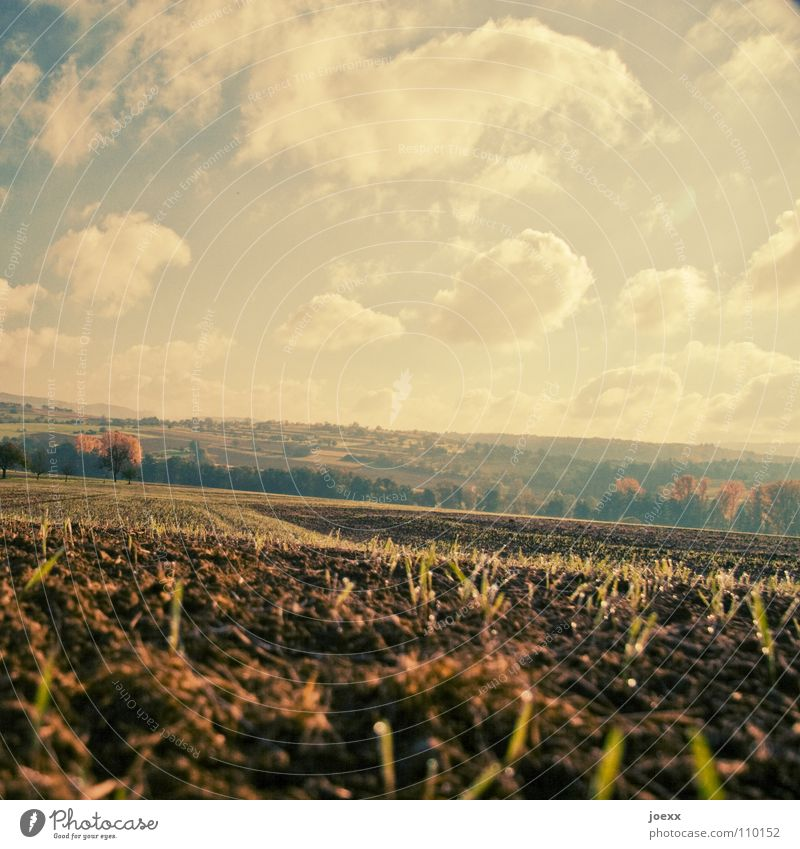 Kahlschlag Feld Ackerbau Aussaat Landwirtschaft Herbst Saatgut Stoppel Wolken Vergänglichkeit Erde Ernte gerteide Himmel Landschaft