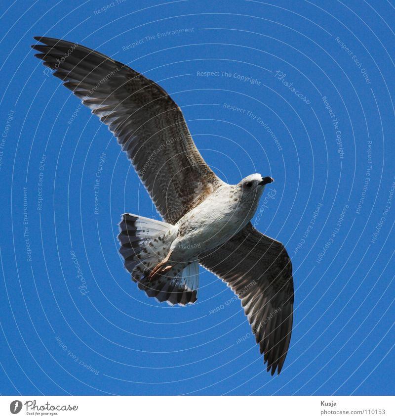"""""""Sabrejet""""-Allwetter-Jäger Himmel blau weiß Meer Vogel fliegen laufen Flügel Jagd Segeln Möwe Schweben Kurve wehen ziehen Türkei"""