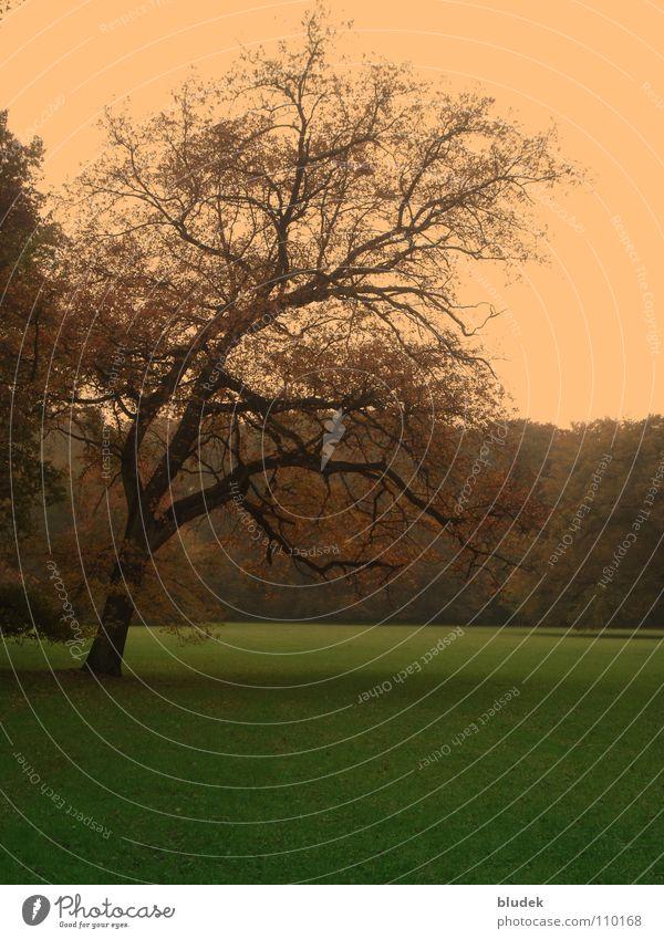 Herbst III Baum Wiese Rasen Bremen Eiche