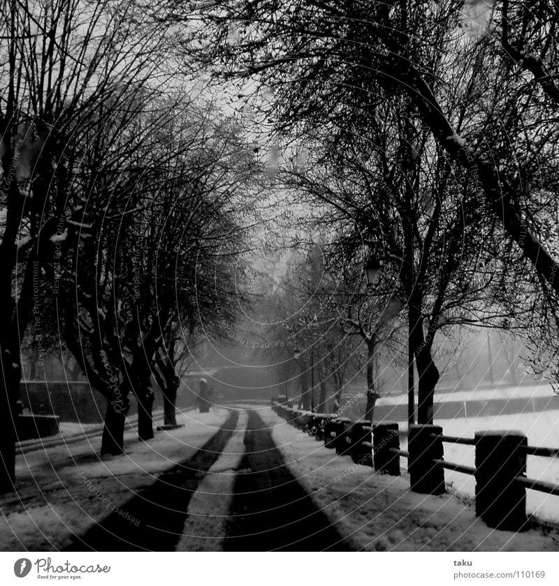 WINTER IM MAI Baum Winter Schnee Spuren Zaun Allee Überraschung Mai Provence Zentrifuge