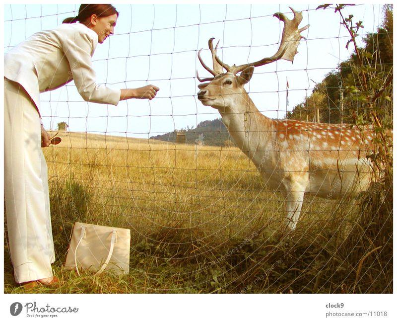 Eine hirschige Freundschaft Frau Natur Tier gelb Wiese orange Verkehr retro Siebziger Jahre Hirsche füttern