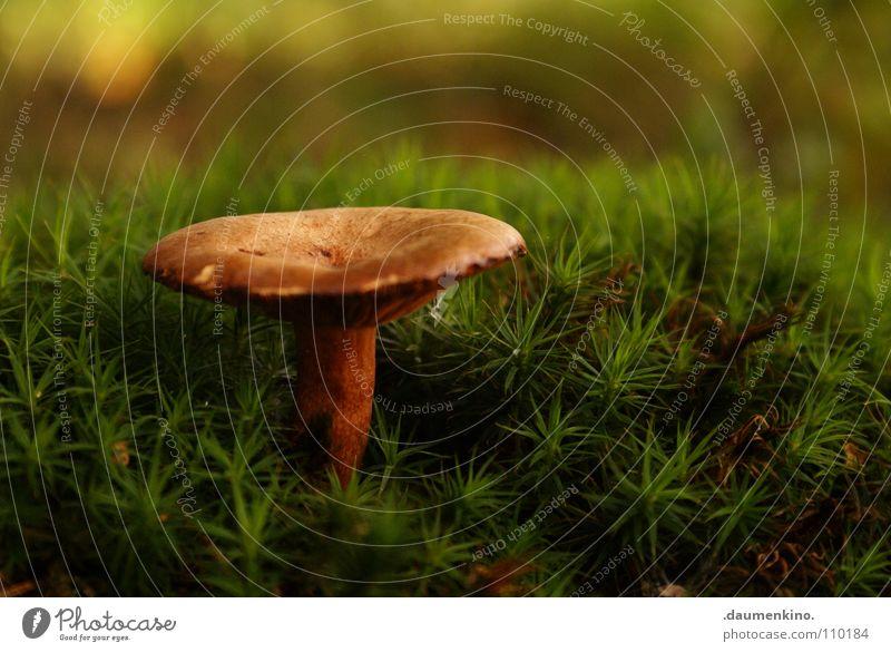 labil Waldboden Herbst Wachstum grün Gras Halm Baum Makroaufnahme Nahaufnahme Pilz Bodenbelag bemoost schärfebereich herbstlich hintergrundunschärfe schön