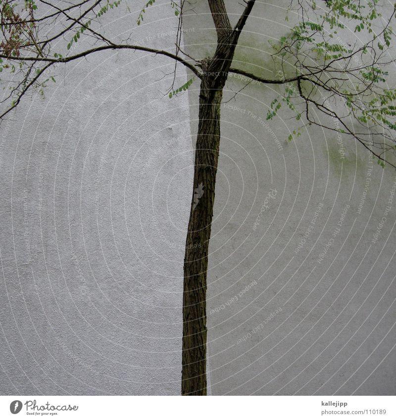 baumgrenze Baum Blatt kalt Herbst Wand Grenze Teilung Trennung unentschlossen Holzmehl Brandmauer entzweit Trennlinie