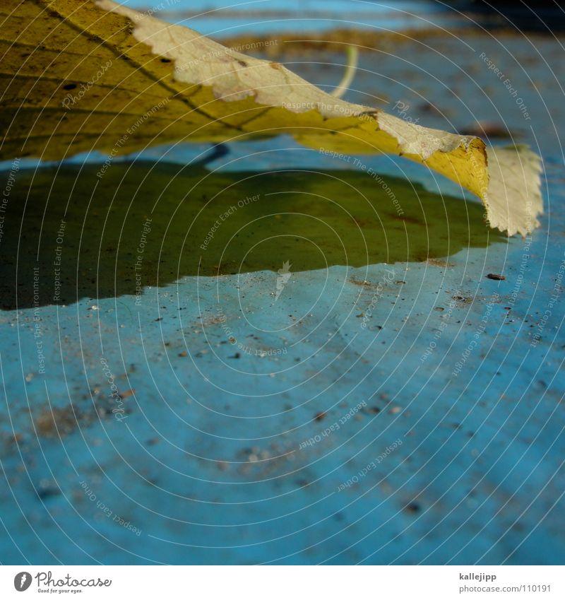 -los Baum Blatt Herbst Wege & Pfade gold leer Schwimmbad Asphalt Ahorn