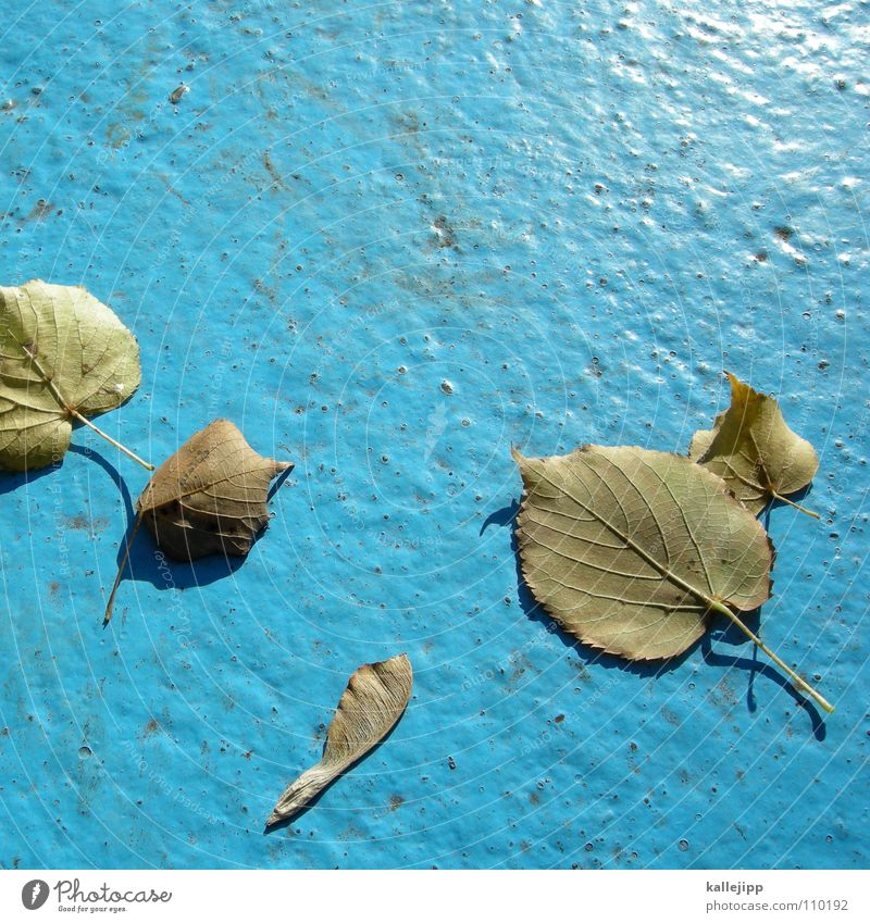 -zeit- Baum Blatt Herbst Wege & Pfade gold leer Schwimmbad Asphalt Ahorn