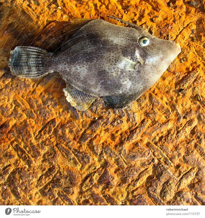 was guckst du? Natur alt Wasser Tier Auge Tod Leben grau klein Traurigkeit Metall liegen gold sitzen dreckig nass