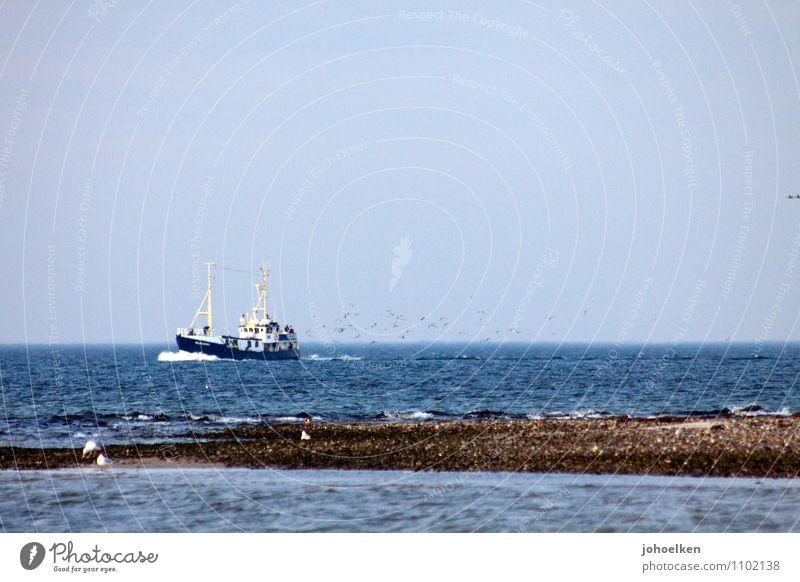 Wasserzeichen | Möwen an achtern Ferien & Urlaub & Reisen Meer Küste Vogel Horizont Arbeit & Erwerbstätigkeit Wildtier Wellen Tourismus Ostsee Tradition fangen