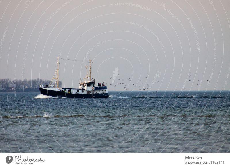 Möwen an achtern II blau Wasser Meer Einsamkeit Tier Küste Lebensmittel Vogel Arbeit & Erwerbstätigkeit Wildtier Tourismus Ostsee Beruf Tradition fangen