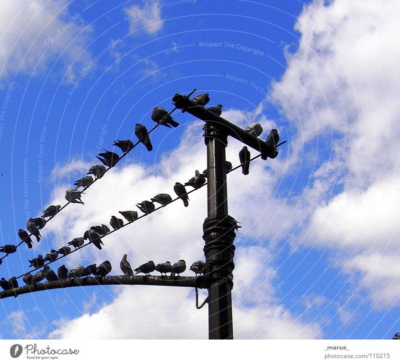 Was gibts neues ?! Himmel blau Freude Wolken Vogel hoch sitzen Laterne eng Strommast Taube tratschen