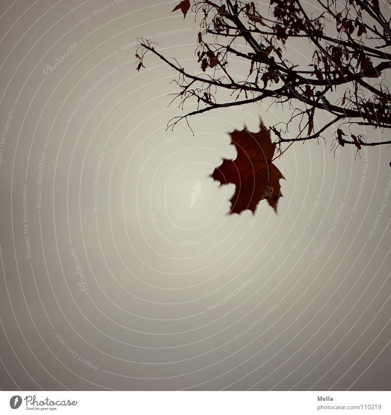 Vor dem Winter Blatt Baum Einsamkeit Trauer Angst hängen festhalten hartnäckig fallen flattern Wind grau Regen Herbst kalt Verzweiflung Ast Zweig Single